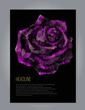 r with black and purple rose