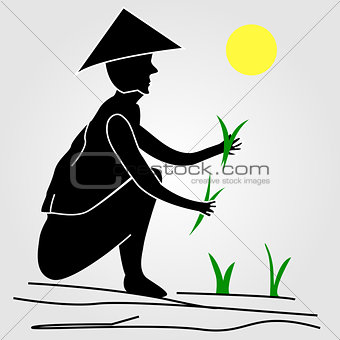 A farmer working in rice fields under the sun