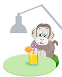 Monkey with Refreshment