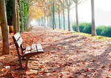 Park bench scenery