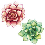 Nice watercolor succulents