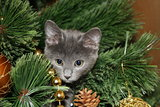 Cute kitten climbed on the tree