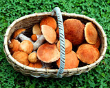 basket boletus mushrooms