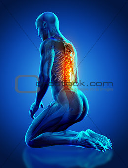3D male medical figure with spine highlighted in kneeling positi