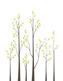 Trees 42