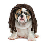 English bulldog puppy wearing a dreadlocks wig and glasses in fr