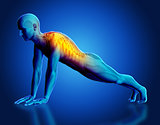 3D male medical figure with spine highlighted in yoga pose