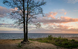 Tree on the seashore sunset view