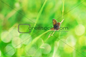 Beautiful butterfly on natural bokeh background