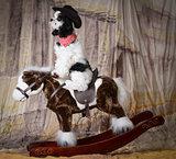 dog riding a horse