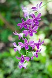 Purple orchid branch on nature background