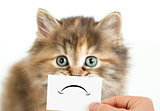 unhappy or sad cat isolated