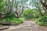 Walkway in the  Kirstenbosch National Botanical Gardens