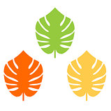 Exotic leaves colorful collection for your design
