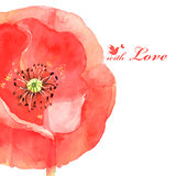 flower poppy love bird
