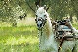Horse on Lesvos