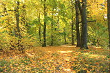 Beautiful autumn forest. Fall scene. Beautiful Autumnal park. Greenwood. Beauty nature scene.