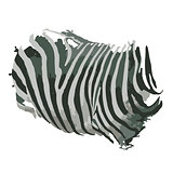 Zebra print for your design