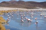 Pink flamingos in wild nature landscape
