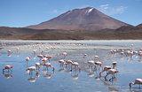 Flamingos in Laguna Hedionda, Bolivia, Atacama desert