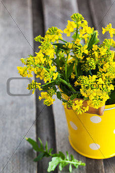 Beautiful summer yellow flowers