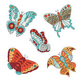 Set of different butterflies.