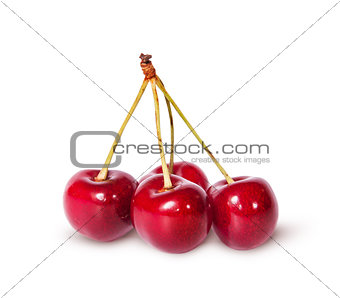 Four red ripe sweet cherries on one branch