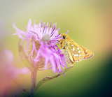 Photo small butterfly