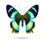 Vector  bright Butterfly isolated. EPS 10