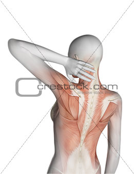 3D female medical figure holding neck in pain