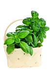 Basket of Fresh Cut Basil