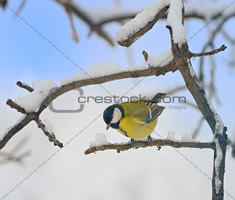 Titmouse on a tree