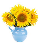 bouquet of sunflowers in blue pitcher isolated on white