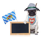 bavarian german pug dog