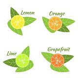 Citrus fruits orange, lime, grapefruit and lemon