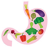 Human Stomach Anatomy with Vegetables Illustration