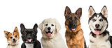 Close-up on dogs head in front of a white background