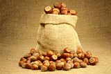 Hazelnuts in Bag