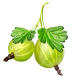 Two gooseberries