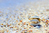 open shells on beach
