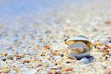 open shells on beach