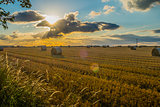 freshly cut straw bales in a field at sunset with lens flare from sun