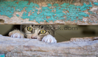 Small kitty through old wooden door hole