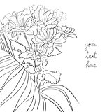 floral sketch card