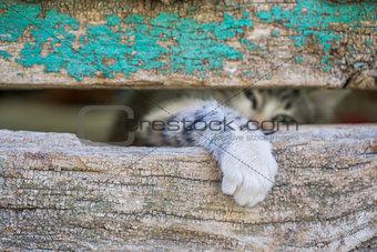 Small kitty leg through old wooden door hole