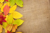 Autumn leaves over burlap texture background