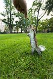 Feeding Wild Squirrel a Peanut
