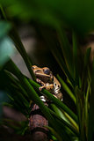 Brown frog on green stems