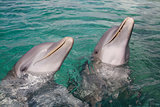 Dolphins in Honduras