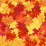 Seamless autumn maple leaves